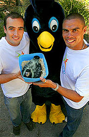Paul Burgess, Kyle Vander Kuyp and Karak show off a four-week-old South-Eastern Red-Tailed Black Cockatoo.